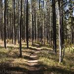 Bechler Falls Trail