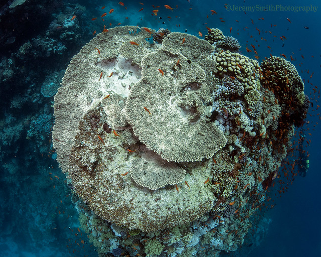 Coral Reef, Hurgada, Red Sea