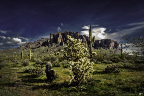 cactus cacti spines pricks landscape arizona view west desert plant flower nature outside outdoors color contrast superstition mountains lostdutchman statepark sky clouds