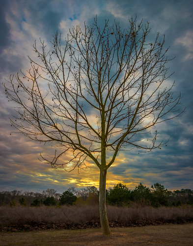 nx500 samsungnx500 rokinon12mmf2 garrardlandingpark roswellga sunrise sunset tree flp
