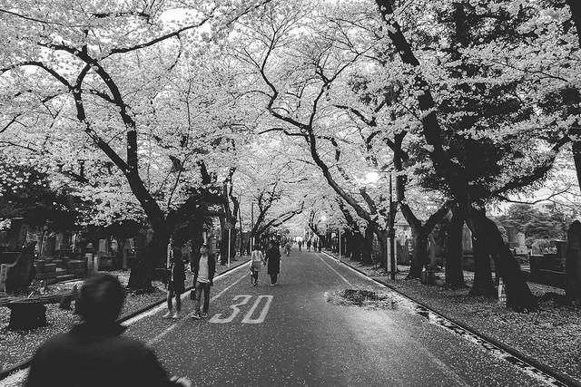 Yanaka Cemetery (谷中霊園)