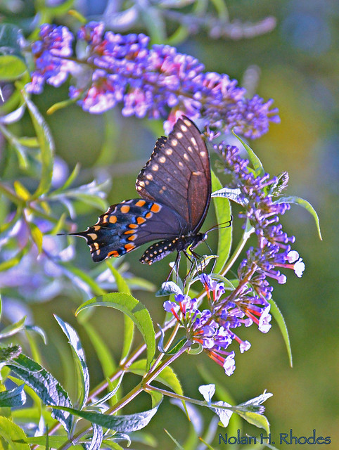 One Very Pretty Butterfly