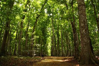 Alas Purwo National Park | Alas Purwo National Park | Flickr