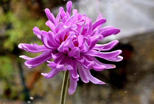 morning flowers rain purple rainy ringexcellence