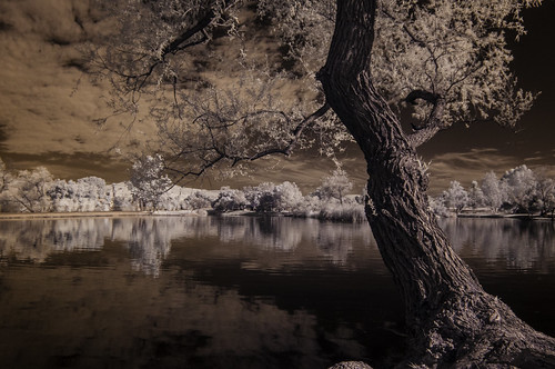 trees reflections nature santeelakes infrared infraredphotography ir convertedinfraredcamera naturalbeauty clouds tree water lake highcontrast
