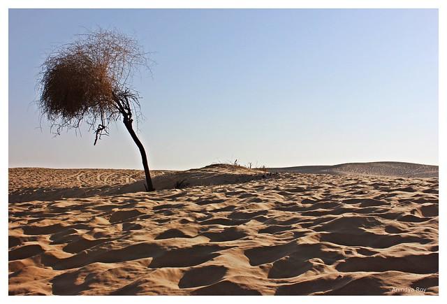 Solitary,Thar desert,Jaisalmer