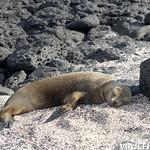 Viajefilos en San Cristobal, Galapagos 047