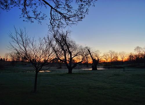 blandy statearboretumofvirginia sunrise predawn mist