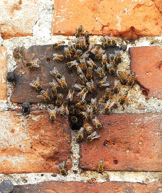 Walls Have Ears! Tell It To The Bees!