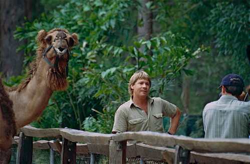 """The Late """" Crocodile Hunter """" Steve Irwin during a TV show at the Zoo 