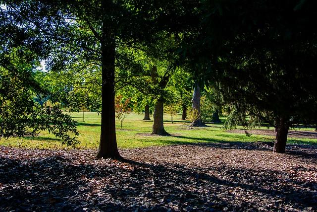 Trees by Post-Dispatch Lake