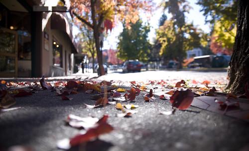 street autumn light color fall leaves oregon leaf nikon fallcolor sidewalk ashland southernoregon d90
