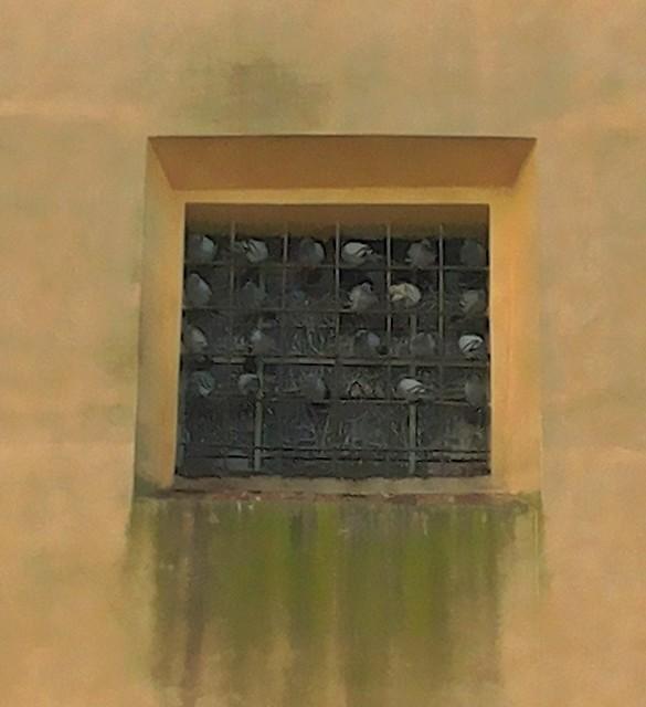 piccioni sulla finestra si un ex convento