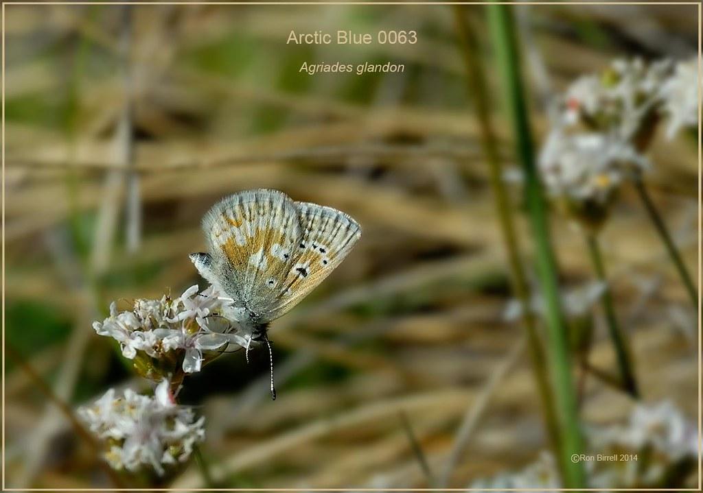 1300 DSC_0063_10 arctic blue