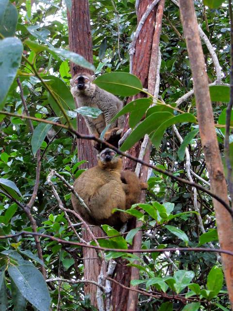 Madagascar3 - 095