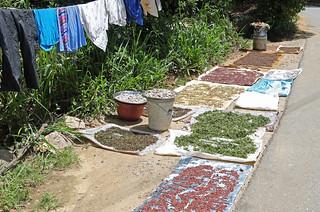 Makuldeniya spices drying GRB_7682 | by Geoff Buck