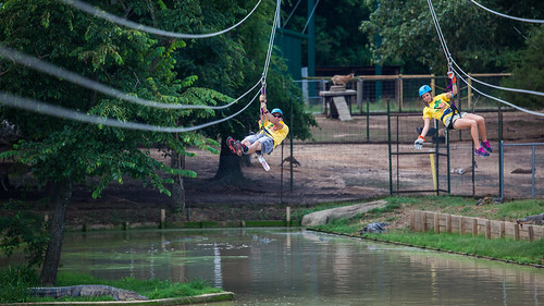 The Adventure Zipline at Gators & Friends in Greenwood, Louisiana   by Shreveport-Bossier: Louisiana's Other Side