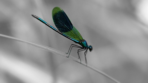 Dragonfly | by bastii.