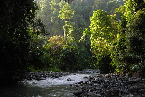 sulawesi indonesia sulawesineck river forest centralsulawesi palukorofault jungle water landscape green asia