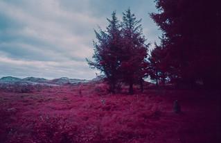 EIR - Heide