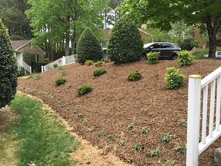 Fresh new plantings on hillside. | by Triangle Landscape Group