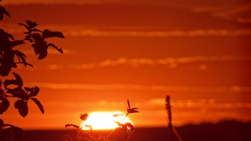 Sonnenuntergang  war nicht allzuwohl geschmückt auch schien es etwas wild verrückt, und wild und rauh war sein Gesicht, die Nase grimm emporgerichtet. Von großem Graus ward es bedeckt, und war auch eben so versteckt von einem Schleier grausig wild 0206