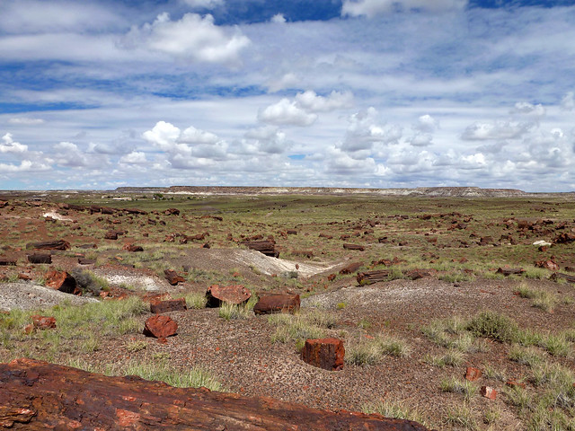 Jasper Forest, Petrified Forest National Park - Arizona