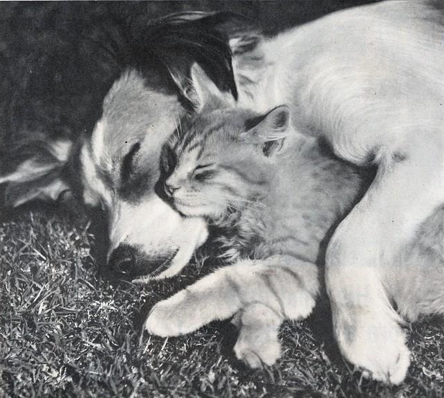 1950-(via File Photo)-