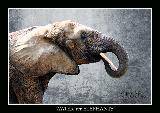 Agua para elefantes - Amparo García Iglesias