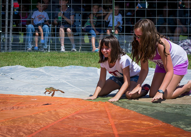 Frog Jump Competition