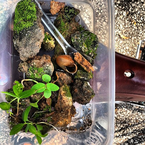 "Rescue #terrarium no. 4 ""Elias"" in progress. The excavators are already at work. We barely got these fellas out in time. 