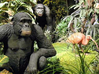We did not come from those gorillas!