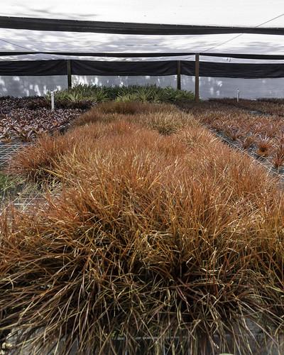 flowers plants interior manatee greenhouse tropical sarasota fl bromiliad tropiflora