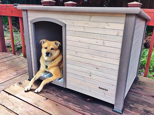 Dog fort v.2 | by tehgipster
