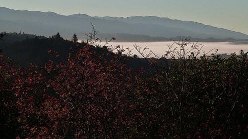 california morning autumn mist fog landscape redleaves mendocinocounty redwoodvalley 95470 pe016