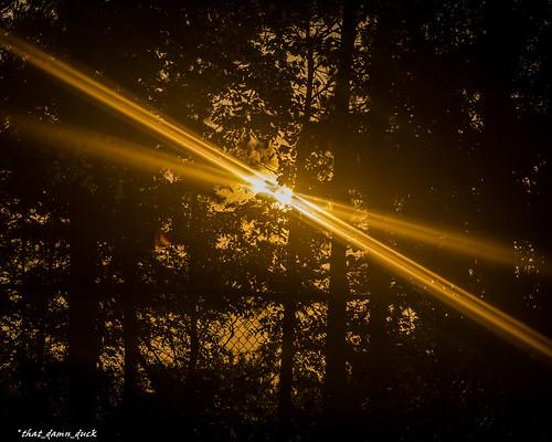 x sunrays sundown nature sunset trees nikon
