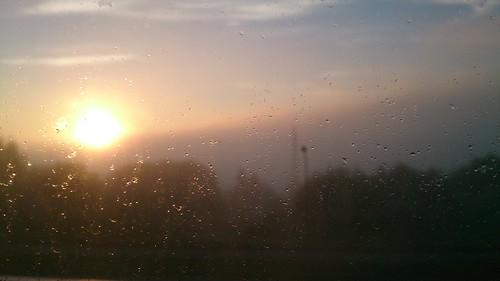 light summer fog forest sunrise sommer skog raindrops lys tåke soloppgang regndråper flickrandroidapp:filter=none