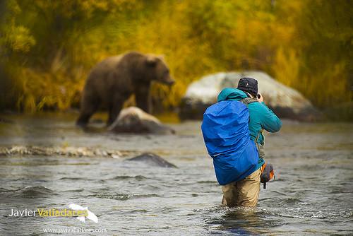 Alaska.- Grizzlys