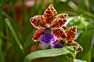 Orchids. Winter Garden - A relaxing oasis in Helsinki | by L.Lahtinen (nature photography)