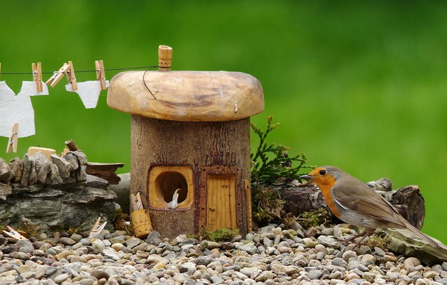 robin stand next to little house on gravel