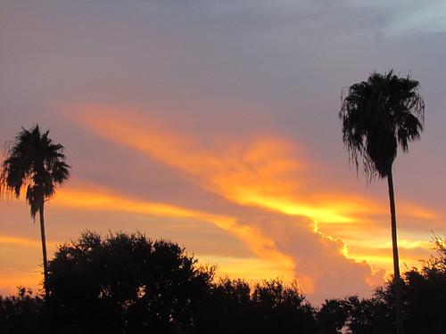 blue trees sky sun beauty clouds sunrise gold rising golden skies texas purple palm