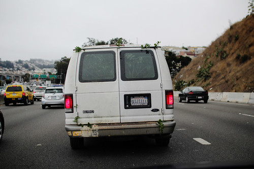 Tree Attempting Escape from Unmarked White Van