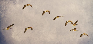 Follow the Leader | by Striking Photography by Bo Insogna
