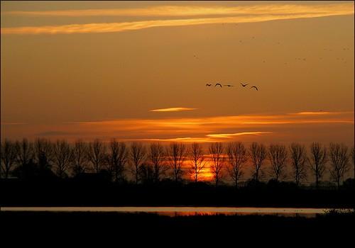 waterbirds watervogels birds vogels groningslandschap hoeksmeer loppersum luchten nature landscape landschap natuur sunrise zonsopkomst ngc