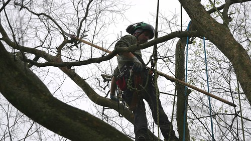 Photo of worker climbing a tree