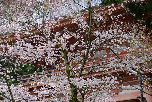 The main gate of Daigoji Temple   by mai:pluie