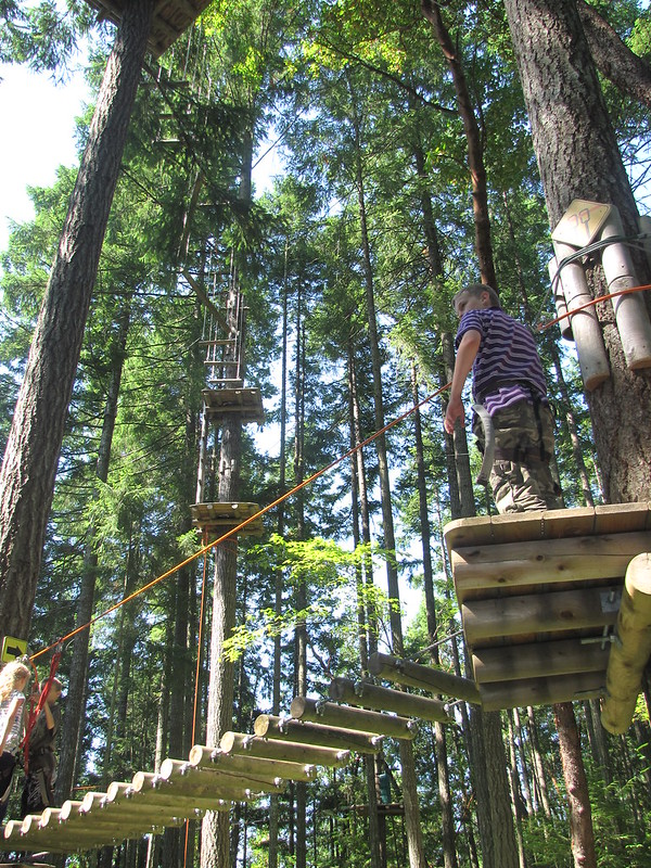 Forest adventure park