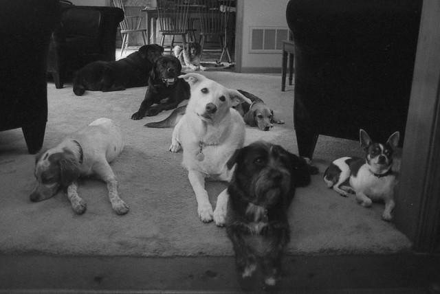 Backyard Dogs, 2013