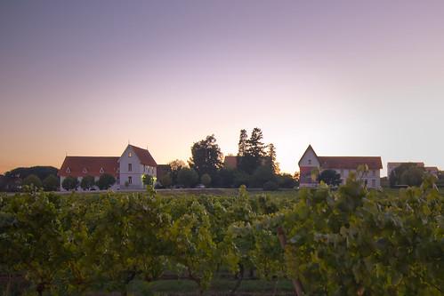 sunset portugal vineyard dusk clear anadia flickrandroidapp:filter=none estaçãovitivinícola