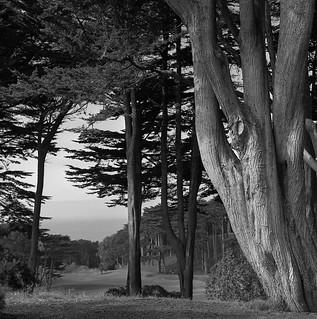 Cypress | by bingley0522